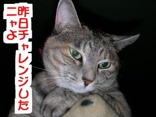 Henshin3