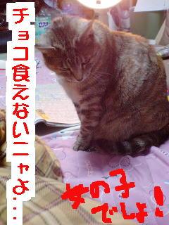 Nayami2