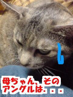 Hamu2