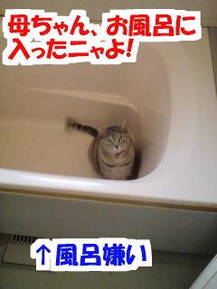 Furo1