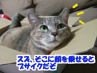 Sany0170