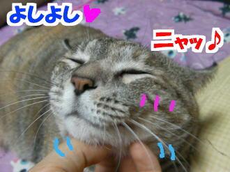 Sany0169