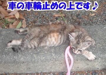 Suzu61
