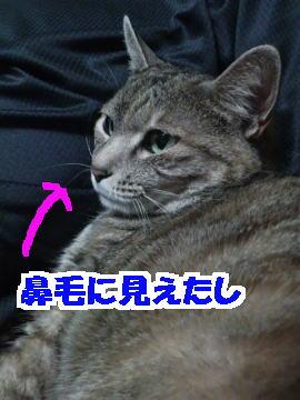 Kira1