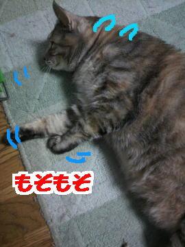 Tsume1
