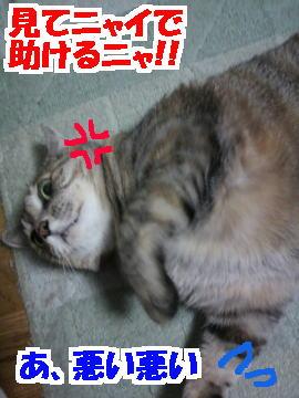 Tsume3
