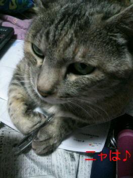 勉強してるつもり