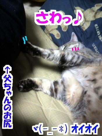 Oshi4
