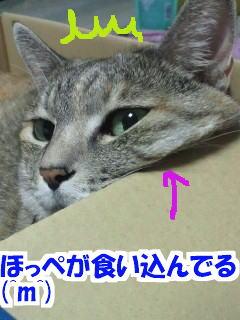 Niku1