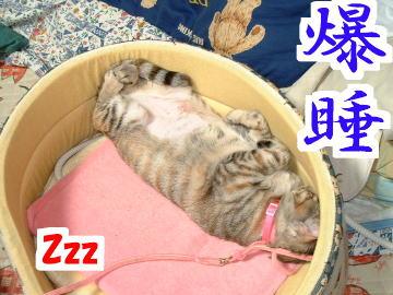 Suzu122434