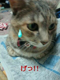 猫は平気?