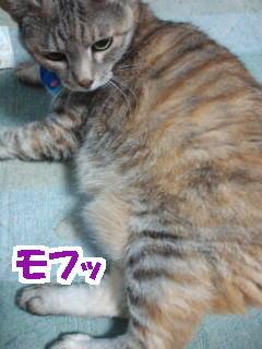 Mofu1