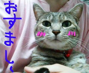 Osumashi2