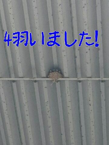1436498786854.jpg