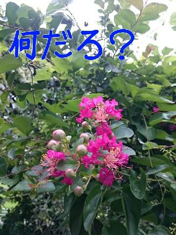 1441077886365.jpg