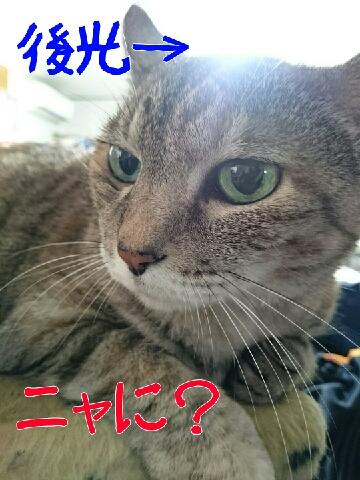 1442201196797.jpg