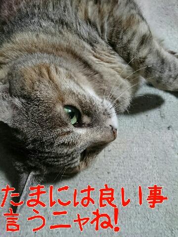 1456889464681.jpg