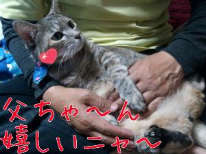 2012-11-13_12.31.28.jpg