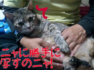 2012-11-13_12.33.00.jpg