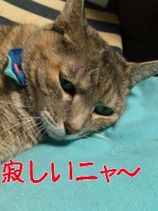 201210238031.jpg