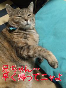 201210238152.jpg