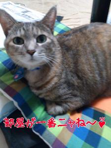 2012103846.jpg