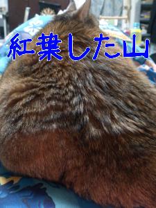 20121118105123.jpg