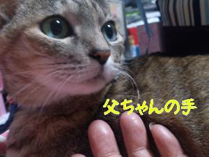 201211812152.jpg