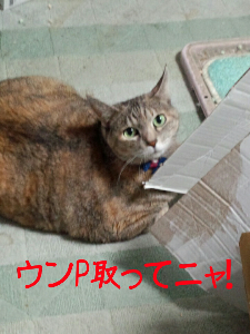 201212178041.jpg