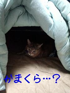 2012122182052.jpg