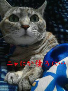 20121224195020.jpg