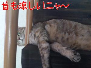 2012727538.jpg