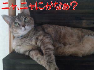 20127275425.jpg