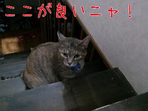 2012730121656.jpg