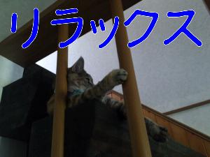 201281122552.jpg