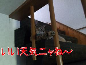 201281122642.jpg