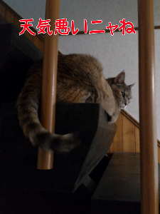 2012813194316.jpg