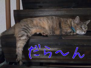 2012823214739.jpg
