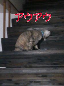 2012825223057.jpg