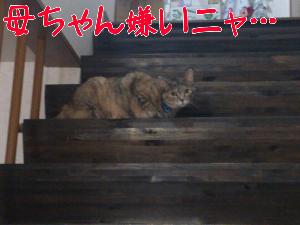 201282881411.jpg