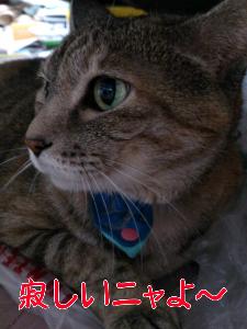 20128515546.jpg