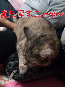 201288122538.jpg