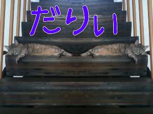 201288205925.jpg