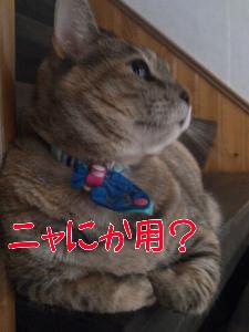 2012910122246.jpg