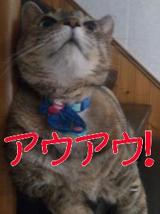 2012910122343.jpg