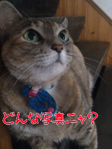 2012910122434.jpg