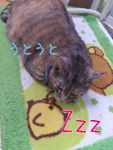201292082751.jpg
