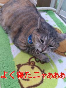 201292082940.jpg