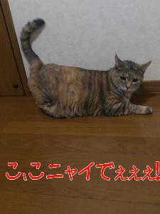 201292182242.jpg