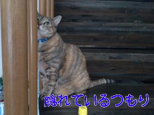 201292475132.jpg